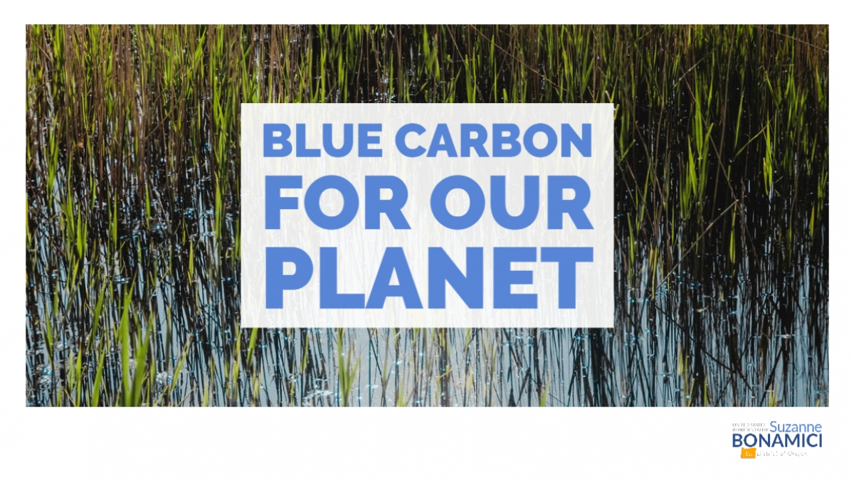 Graphic of blue ocean with text Blue Carbon for our Planet